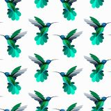 Vector seamless pattern with hummingbirds, colibri. Texture for. Wallpapers, textile design, web page backgrounds Stock Photos