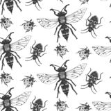 Vector seamless pattern with insects. Vector entomological macro drawn seamless pattern with insects. Sketched element background can be used as a texture for vector illustration