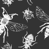 Vector seamless pattern with insects. Vector entomological macro drawn seamless pattern with insects. Sketched element background can be used as a texture for stock illustration