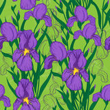 Seamless pattern with iris flower Stock Image