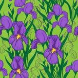 Seamless pattern with iris flower. Vector seamless pattern with iris flowers Stock Image