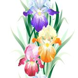 Vector seamless pattern with Iris flowers Royalty Free Stock Photo