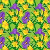 Iris and narcissus. Vector seamless pattern with iris and narcissus Royalty Free Stock Image