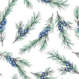 Vector seamless pattern with juniper branches. Botanical hand dr stock illustration
