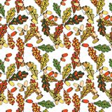 Vector seamless pattern with leaves of oak Stock Image