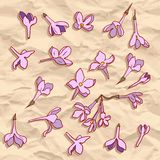 Vector seamless pattern with lilac flowers Stock Photos