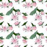 Vector seamless pattern lotus flowers royalty free illustration