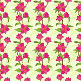 Vector seamless pattern with magnolia Royalty Free Stock Photos