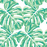 Vector seamless pattern with monstera leaves. Royalty Free Stock Image