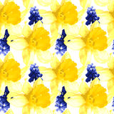 Vector seamless pattern with narcissus and muscari Royalty Free Stock Images