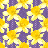 Vector seamless pattern with narcissus Stock Images