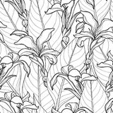 Vector seamless pattern with ornate Canna lily or Canna flower and leaves on the white background. Floral pattern in contour style Royalty Free Stock Photos