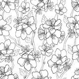 Vector seamless pattern with outline blooming Apricot flower bunch, branch and ornate leaves in black on the white background. Royalty Free Stock Images