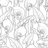 Vector seamless pattern with outline Calla lily or Zantedeschia.. Ornate flower, bud and leaves in black on the white background. Floral pattern in contour Royalty Free Stock Photography