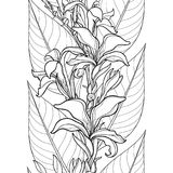 Vector seamless pattern with outline Canna lily or Canna flower and leaf on the white background. Floral pattern in contour style. Royalty Free Stock Image