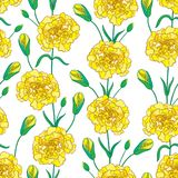 Vector seamless pattern with outline Carnation or Clove flowers, bud and leaves in yellow and green on the white background. Floral background in contour style Stock Images