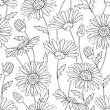 Vector seamless pattern with outline Chamomile flower, bud and leaves on the white background. Chamomile pattern in contour style. Royalty Free Stock Photos