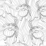 Vector seamless pattern with outline Cypripedium calceolus or Lady`s-slipper orchid and leaves on the white background. Royalty Free Stock Images