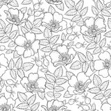 Vector seamless pattern with outline Dog rose or Rosa canina. Flower, hips and leaves on the white background. Rosehip pattern. Stock Image