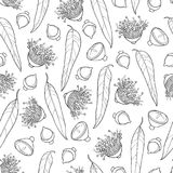 Vector seamless pattern with outline Eucalyptus globulus or Tasmanian blue gum, fruit, flower and leaf on the white background. Royalty Free Stock Photography