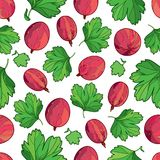 Vector seamless pattern with outline Gooseberry with ripe red berry and green leaf on the white background. Fruit background. Stock Photography