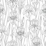 Vector seamless pattern with outline Iris flowers, bud and leaves in black on the white background. Ornate floral background. Vector seamless pattern with vector illustration