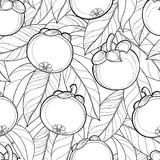 Vector seamless pattern with outline Mangosteen or Garcinia mangosteen fruit and leaf on the white background. Fruit pattern. Vector seamless pattern with Royalty Free Stock Image