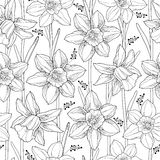 Vector seamless pattern with outline narcissus or daffodil flower and leaves on the white background. Floral background. Stock Images
