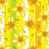 Vector seamless pattern with outline narcissus or daffodil flower in orange and yellow on the striped backdrop. Floral background. Royalty Free Stock Photography