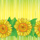 Vector seamless pattern with outline open Sunflower or Helianthus flower in yellow and green leaves on the striped background. Royalty Free Stock Photography