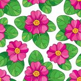 Vector seamless pattern with outline pink Primula or Primrose flower and green leaves on the white background. vector illustration