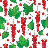 Vector seamless pattern with outline Red currant berry bunch and green leaves on the white background. Background with red berry. Royalty Free Stock Images