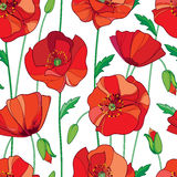 Vector seamless pattern with outline red Poppy flower, bud and green leaves on the white background. Elegance floral background. Royalty Free Stock Photos