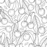 Vector seamless pattern with outline ripe Cherry, berry and leaves in black on the white background. Floral pattern with cherry. Vector seamless pattern with Royalty Free Stock Photography