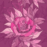 Vector seamless pattern with outline rose flower and ornate foliage in pink on the maroon background. Elegance floral background. Stock Images
