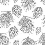 Vector seamless pattern with outline Scots pine or Pinus sylvestris. Pine and cones in black on the white background. Stock Image