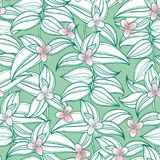 Vector seamless pattern with outline Tradescantia or Wandering Jew flower and ornate striped leaf in white on the pastel green. Vector seamless pattern with Stock Photography
