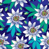 Vector seamless pattern with outline tropical Passiflora or Passion flowers in blue and white, bud and leaves on the blue. Royalty Free Stock Photo