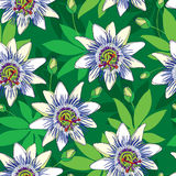 Vector seamless pattern with outline tropical Passiflora or Passion flowers in blue and white, bud and leaves on the green. Stock Photography
