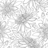 Vector seamless pattern with outline tropical Passiflora or Passion flowers, bud and leaves on the white background. Stock Image