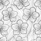 Vector seamless pattern with outline Vanda orchid flower and leaves on the white background. Floral pattern with Vanda flower. Stock Photography