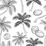 Vector seamless pattern of palm. Different black white kinds of tropical palmtrees and coconut. Contour sketch. Background monochrome isolated on white royalty free illustration