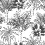 Vector seamless pattern of palmtrees. Different black white kinds of tropical palm contour sketch background monochrome. Isolated on white background vector illustration