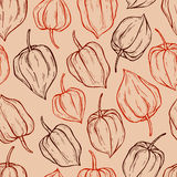 Vector seamless pattern of physalis Royalty Free Stock Photography