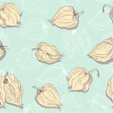 Vector seamless pattern of physalis Royalty Free Stock Image