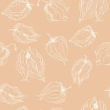 Vector seamless pattern of physalis Royalty Free Stock Images