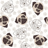 Vector seamless pattern with pug-dog and traces. Stock Photography