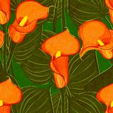 Vector seamless pattern with red calla Stock Photos