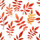 Vector seamless pattern with red leaves Royalty Free Stock Photography