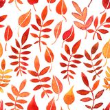 Vector seamless pattern with red leaves Royalty Free Stock Image